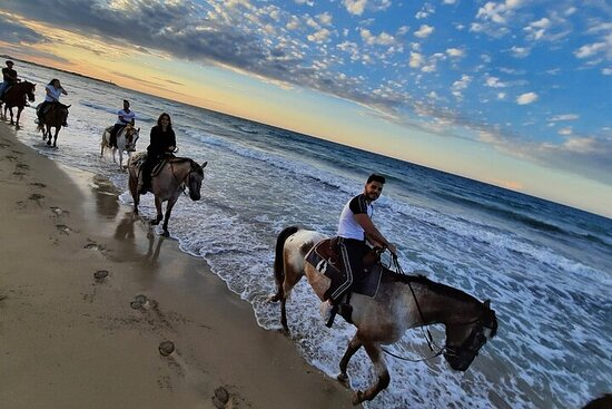 Horse ride of 2 hours in the Coastal Dunes Park