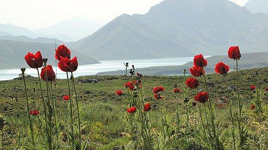 Golestan Province, Iran: Golestan 25