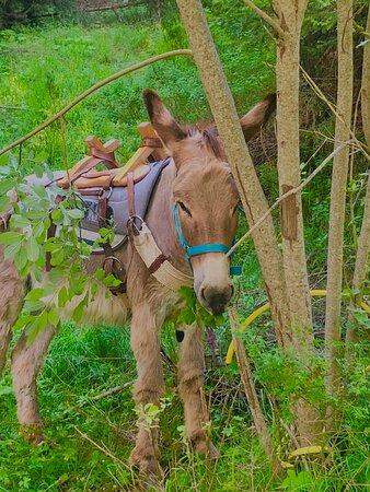 Gabian <3 - Изображение Anes De Blore - donkey trekking, Valdeblore - Tripadvisor