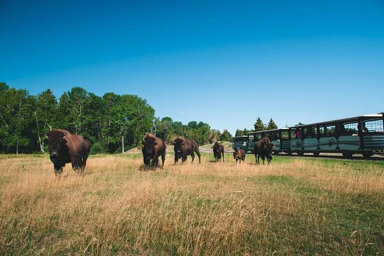 Zoo sauvage of Saint-Felicien