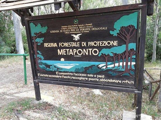 Riserva Naturale Statale Di Metaponto