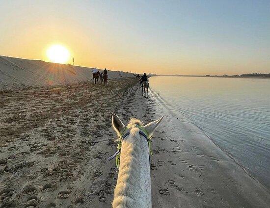 اسطبلات سنام لركوب الخيل على الشاطئ - ابوظبي