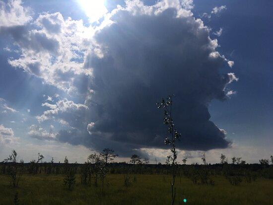 Eco Trail Sestroretskoye Swamp