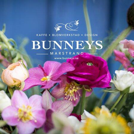 Bunneys