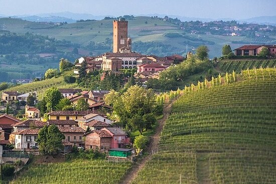 Full-Day Private Langhe Tour with Wine Tasting from Milan