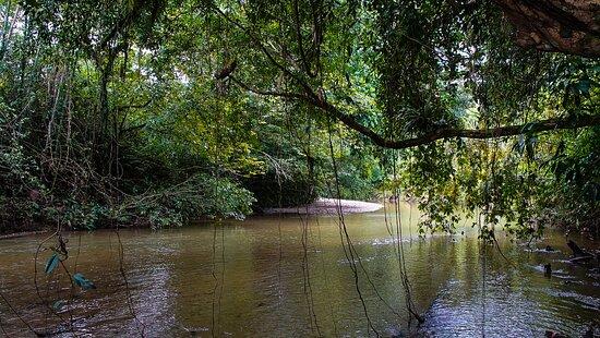 Fotografías de Grand Selva Lodge & Tours - Fotos de Ahuano - Tripadvisor