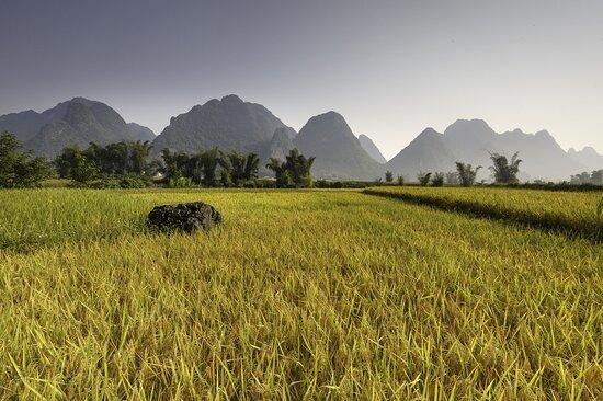 Cao Bang, Vietnam: Ricefield