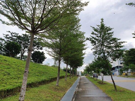 Ang Mo Kio Linear Park