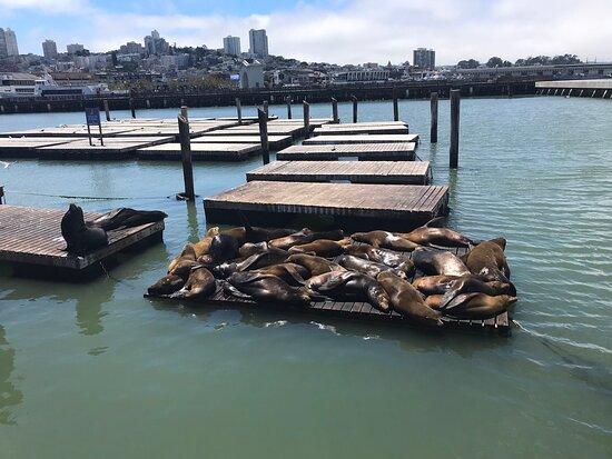 Sea Lion at Pier 39 - Picture of Pier 39, San Francisco - Tripadvisor