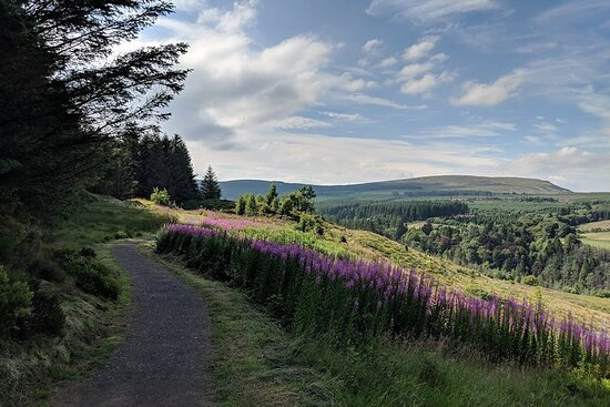 Private, bespoke, full day guided hikes anywhere in NI, with...