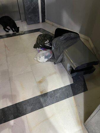 soper på 3 våning fram för hissen där en katt äter det