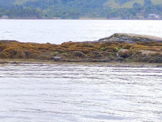 Lovely time on the seal spotting cruise with large group of adults and children.