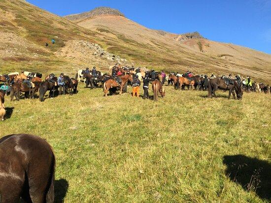 Skrapatunguréttir on the Icelandic horses