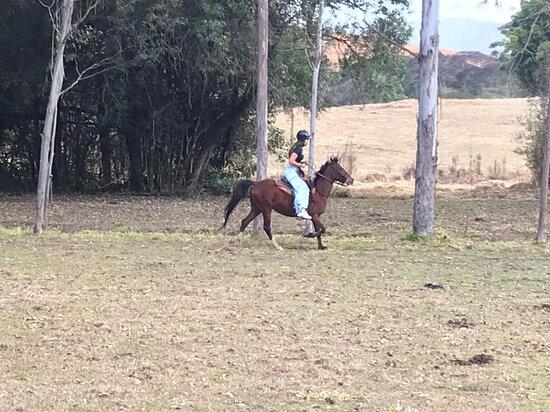 Encantador De Cavalos
