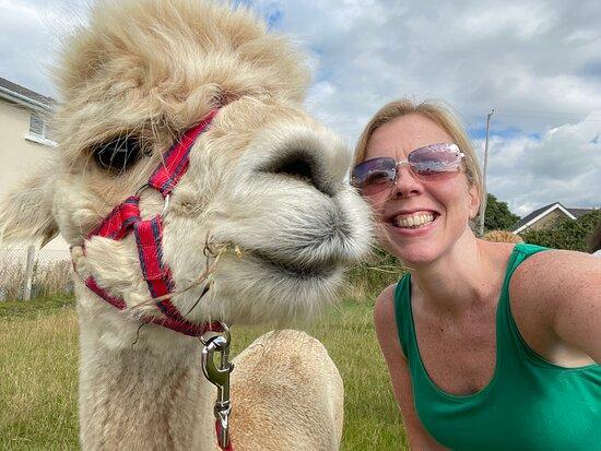 Cranfield Alpacas (alpaca Experiences In The Mournes).