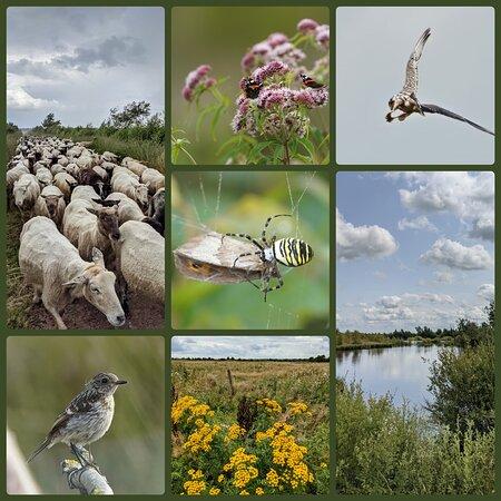 Internationaler Naturpark Bourtanger Moor-Bargerveen