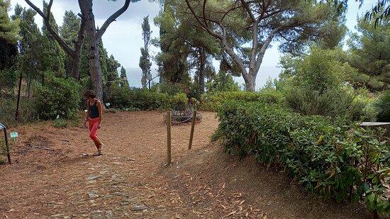 viali del parco