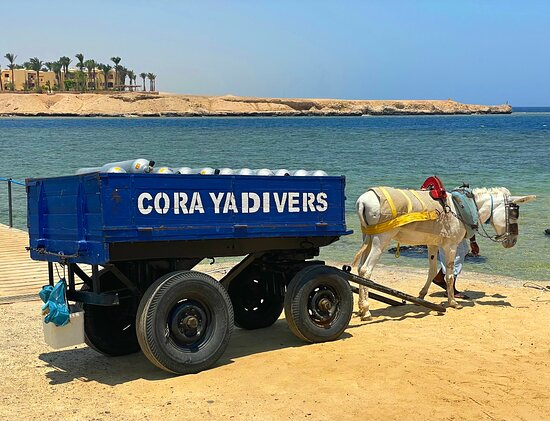 Coraya Divers