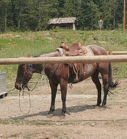 Horses tied up in full sun, for two days, in full tack.