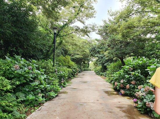 Jeju, Corea del Sur: 스누피 가든 가볼만한 곳이다 엄청 넓고 잘 꾸며놨다 옛날에 신문에서 보던 생각이 났다  딸아이가 가자고 해서 왔는데 딸아이는 힘들다고 하고 내가 신났던것 같다