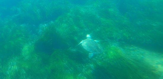 Bilder von Atlantis Turtle Watching Cruise – Fotos von Paphos - Tripadvisor