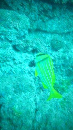 Very bright fish