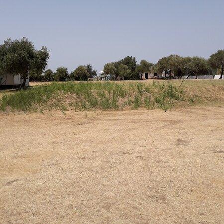 Il villaggio è tutto così, tranne una piccola area, dove c'è qualche pianta