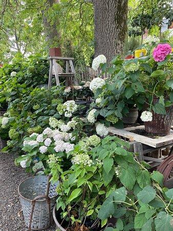 Några blommande växter