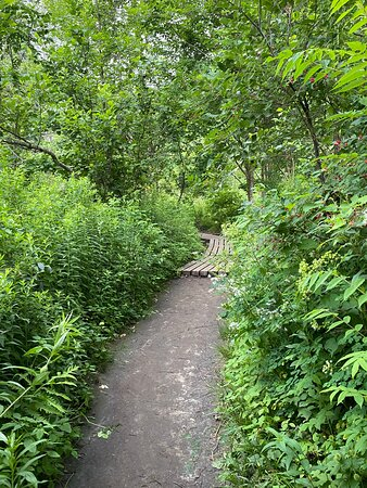 Hiking up Moss Glen Falls
