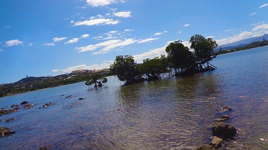 Noumea, Neukaledonien:  ╭🍃   Mangrove Trees ▪️▪️ Magenta Bay   🍃 ╮🔹🔹  Nouméa Shores - New Caledonia  🔵
