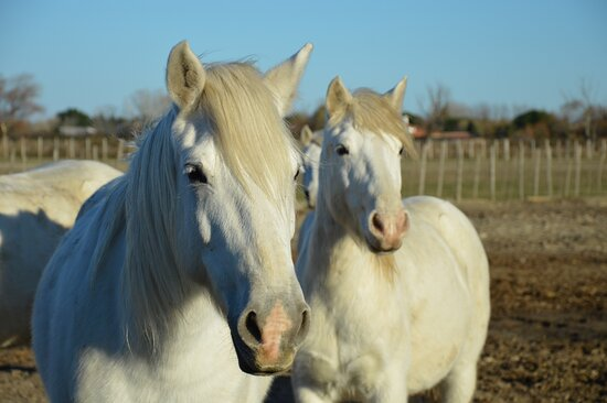Camargue Experience