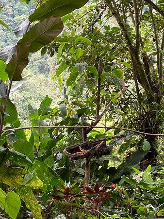 Hermoso lugar donde pueden observarse aves en libertad a una distancia menor de 1 metro para el caso de colibríes y menos de 3 mt para otras especies. Un lugar obligado para los amantes del avistamiento de estos hermosos animales. Hay un lugar perfecto para ver al Gallito de Roca, un sendero de aprox 30 mins de exigencia mod-alta y de selva húmeda, recomendado ir con zapatos apropiados porque puede estar resbaloso el terreno a causa del lodo. Empanadas de Doña Dora deliciosas