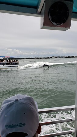 Potret Clearwater Encounters with Dolphins Tour