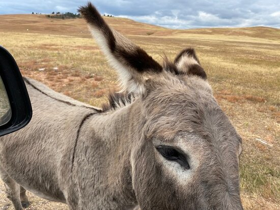 Up Close and Personal with a Donkey