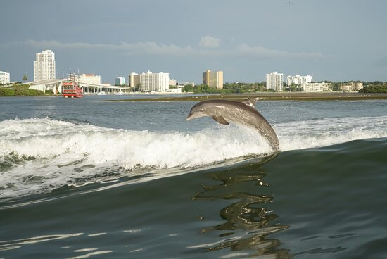Clearwater Encounters with Dolphins Tour: So much fun!   Thank you so much for a wonderful time!