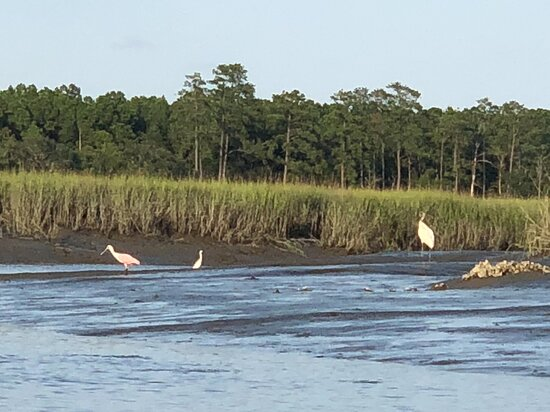 Roseate spoonbills have made a home here in the marshes.