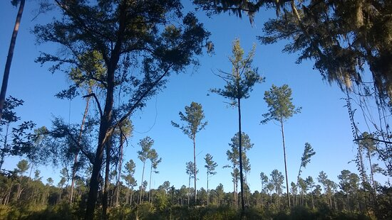 Visitors have an opportunity to learn about sustainable forestry at Melon Bluff.