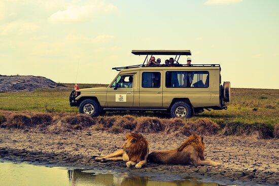 I Dream of Africa Safari