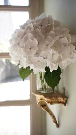 Les fleurs décoratives.