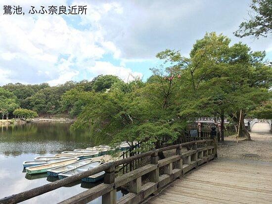 Sagi Pond