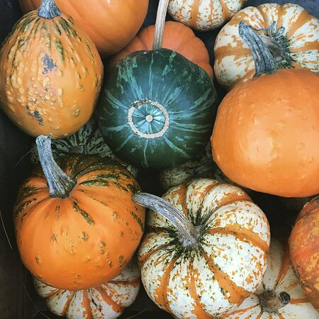 Pumpkins available at the kiosk and for U-PICK (pick your own) in the pumpkin patch!