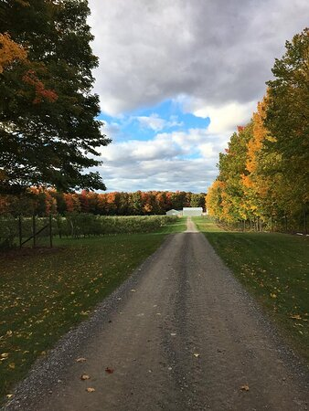 Views of the orchard in the fall.