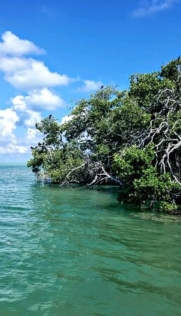 Islamorada mangroves