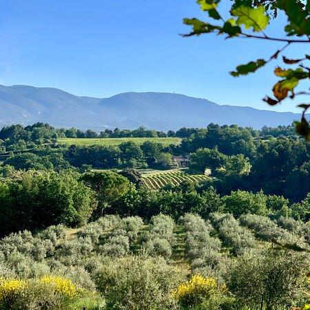 Vue imprenable sur le massif du Luberon depuis l'oliveraie