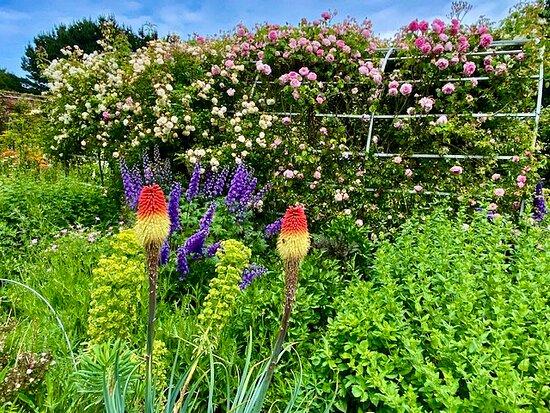an array of colour in walled garden