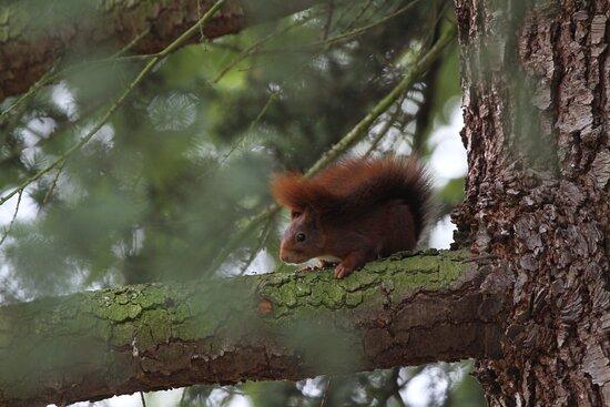 Un autre écureuil qui observe le photographe
