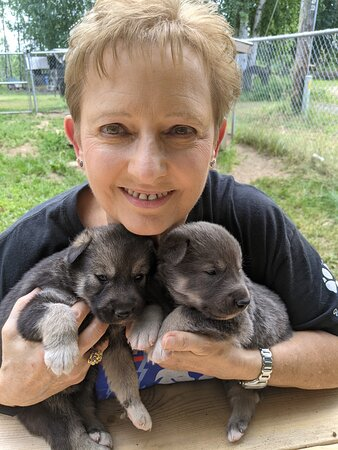 Sled Dog Mushing and Kennel Tour - 2 Hours: Future champions!