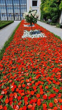 Jolies fleurs rouges