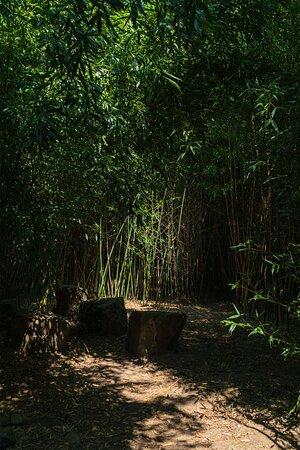 Rustplek op het Blotevoetenpad midden in het bamboebos