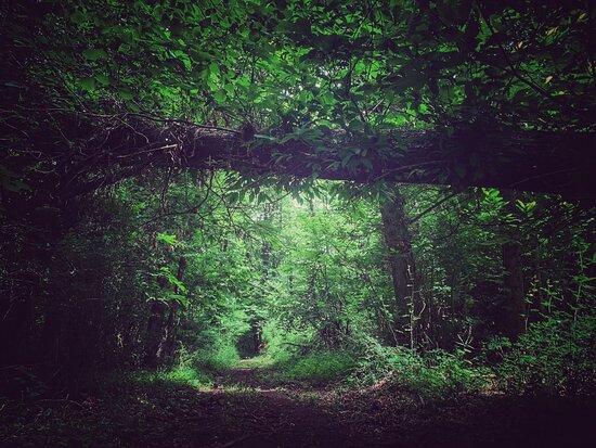 Terapia Forestale Fiuggi